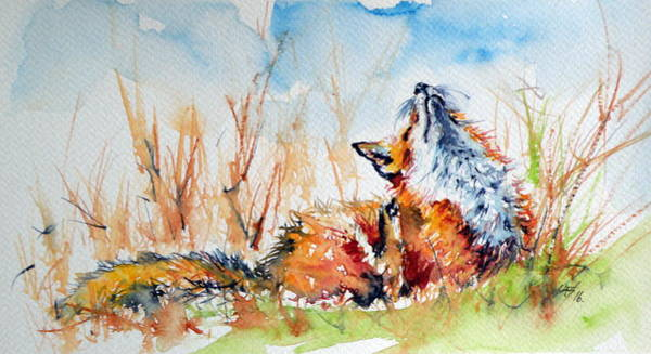 Wild Life Painting - Red Fox by Kovacs Anna Brigitta