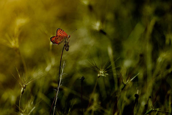 Butterfly Photograph - Untitled by Antonio Grambone