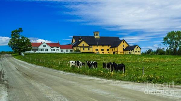 Photograph - Vermont Dairy Farm. by New England Photography