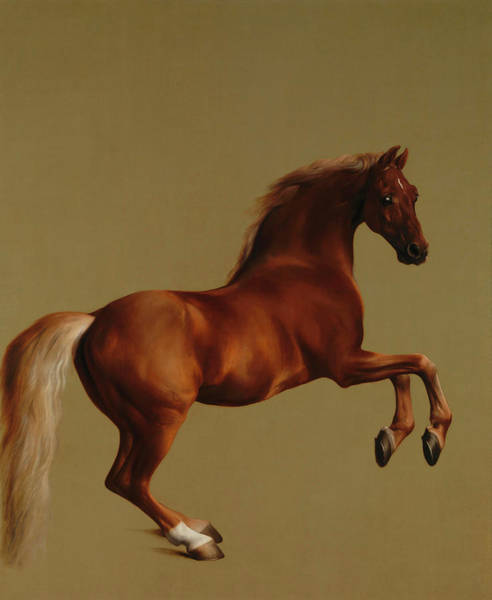 Horseshoes Painting - Whistlejacket by George Stubbs