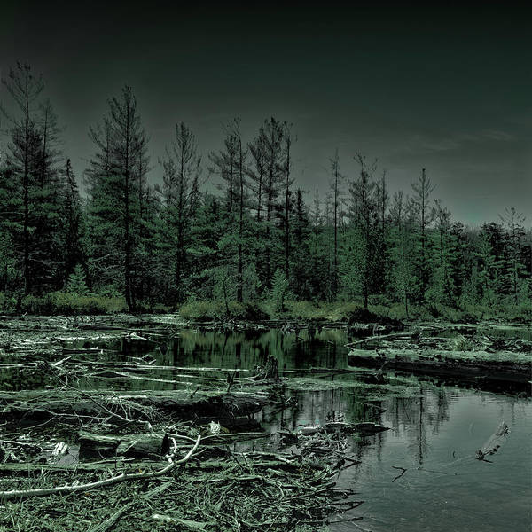 Photograph - 8th Lake Bog by David Patterson