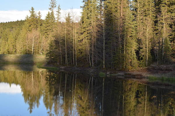 Photograph - Shadow Reflection Kiddie Pond Divide Co by Margarethe Binkley