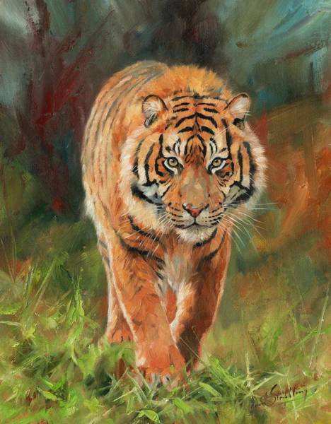 Bengal Tiger Painting - Amur Tiger by David Stribbling