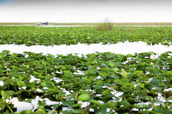 Airboat Photograph - Everglades by Juan Silva