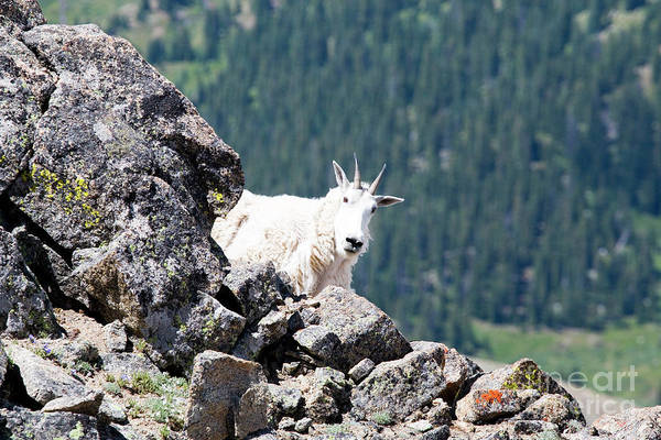 Photograph - Hiking The Mount Massive Summit by Steve Krull