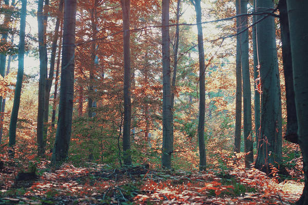 Wall Art - Photograph - Into The Woods by Violet Gray
