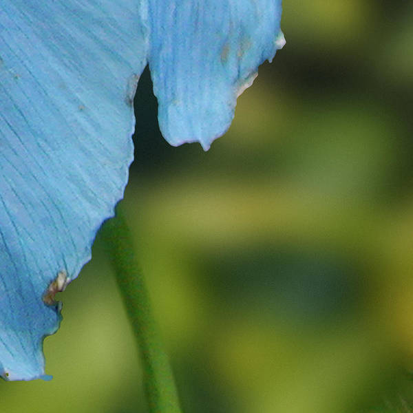 Photograph - 9 Of 9 Blue Flower, Butchart Gardens, Victoria Bc Canada Section by Michael Bessler