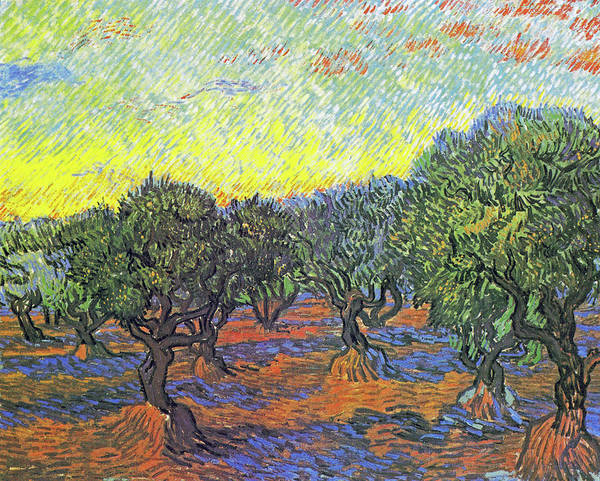 Painting - Olive Grove by Vincent van Gogh
