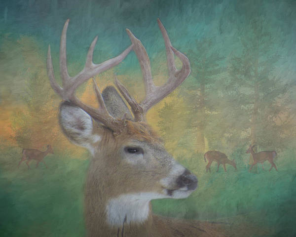 Photograph - 9 Point Buck Painterly Scene #1 by Patti Deters