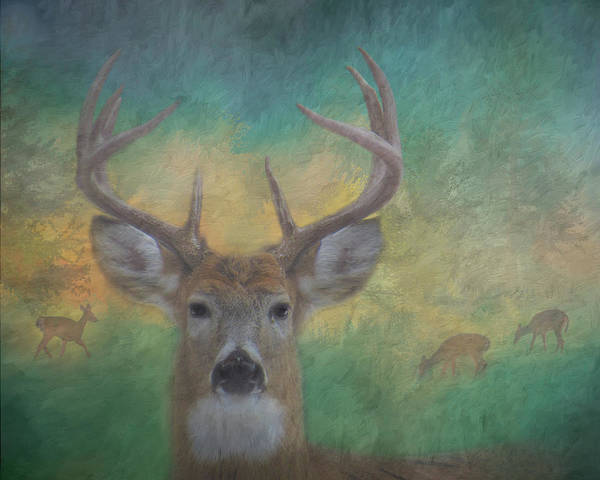 Photograph - 9 Point Buck Painterly Scene #2 by Patti Deters