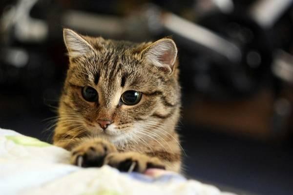 Animal Digital Art - Cat by Super Lovely