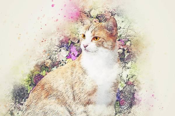 Pattern Digital Art - Cat by Super Lovely