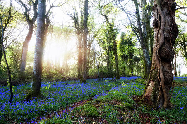 Bluebell Photograph - New Forest - England by Joana Kruse