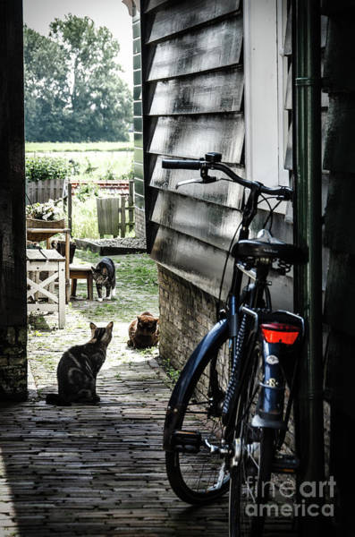 Photograph - A Backstreet With Cats And Bicycle In Marken by RicardMN Photography
