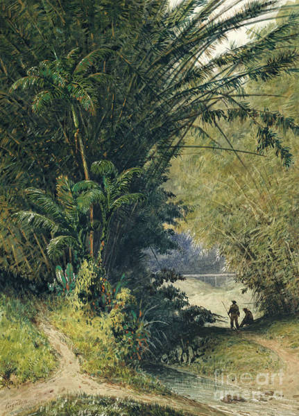 Trinidad Wall Art - Painting - A Bamboo Grove In Trinidad by Michel-Jean Cazabon