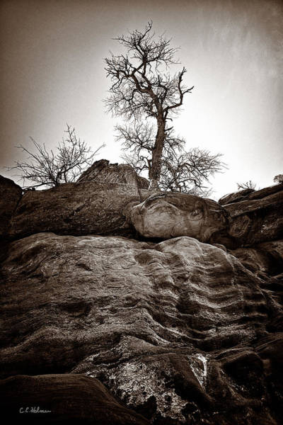 Photograph - A Barren Perch - Sepia by Christopher Holmes