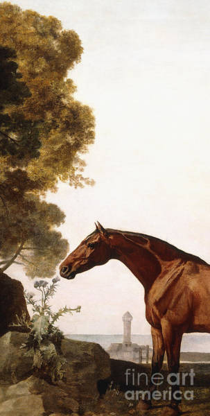 Chestnut Horse Painting - A Bay Arab In A Coastal Landscape by George Stubbs