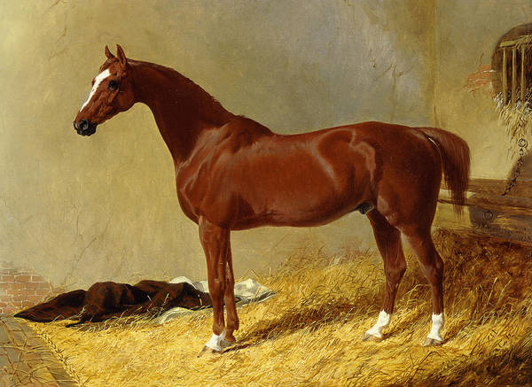 Wall Art - Painting - A Bay Racehorse In A Stall, 1843 by John Frederick Herring Snr