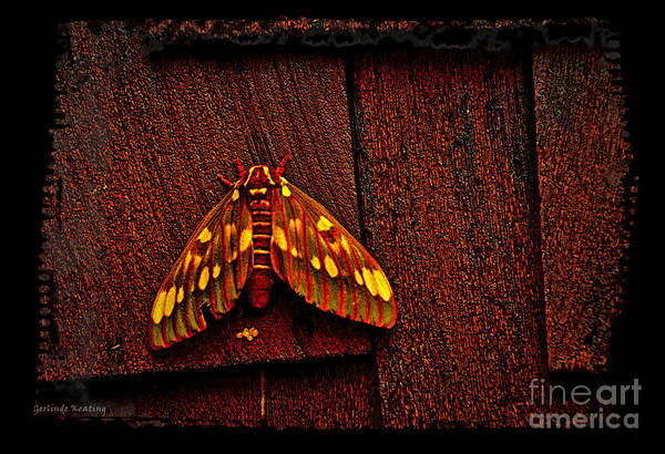 Photograph - A Beautiful Moth by Gerlinde Keating - Galleria GK Keating Associates Inc