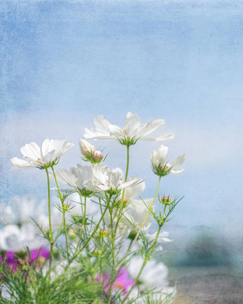Photograph - A Beautiful Summer Day by Jennifer Grossnickle