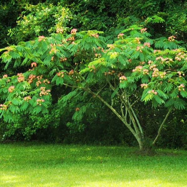 Photograph - A Beautifull Flowering Tree At My by Cheray Dillon