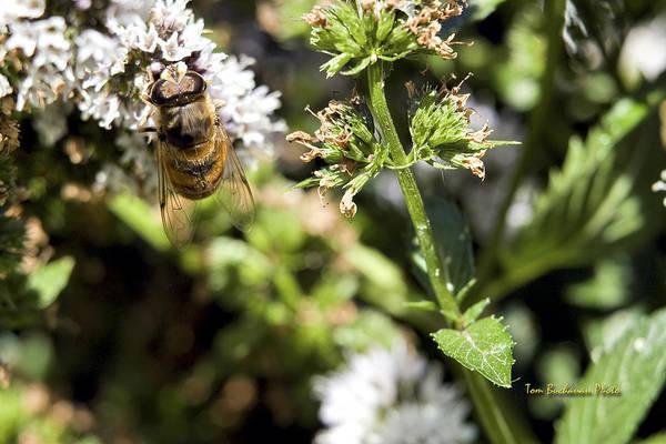 Wall Art - Photograph - A Bee On A Flower by Tom Buchanan