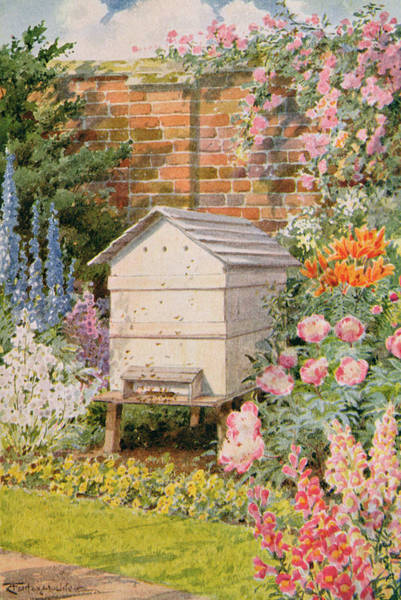 Wall Art - Painting - A Beehive by Louis Fairfax Muckley