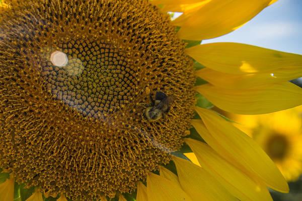 Wall Art - Photograph - A Bees Work by Kristopher Schoenleber