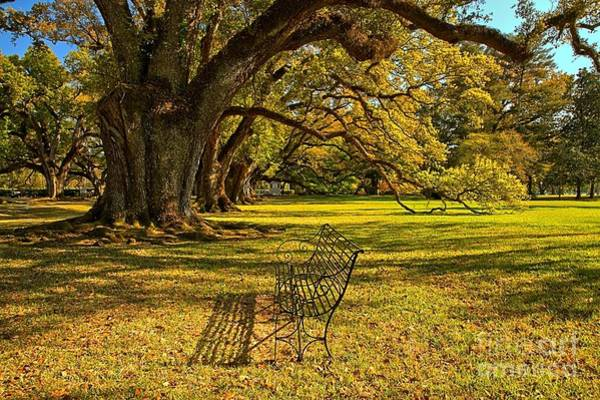 Photograph - A Bench Under The Oaks by Adam Jewell