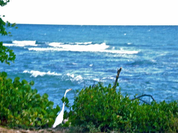 A Bird And The Sea Art Print