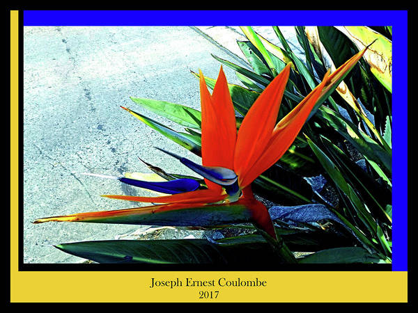 Digital Art - A Bird The Flowers In Paradise  by Joseph Coulombe