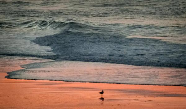 Photograph - A Bird's Eye View by Karen Wiles