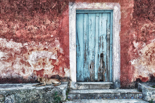 Wall Art - Photograph - A Blue Door And A Blue Dog by Renee Sullivan
