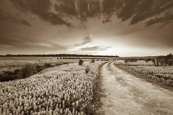 Wall Art - Photograph - A Bluebonnet Field Under Evening Sky - Sepia - Texas by Ellie Teramoto