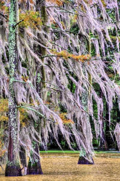 Photograph - A Blustery Autumn Day by JC Findley