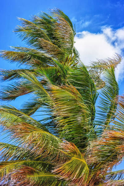 Photograph - A Blustery Day by John M Bailey