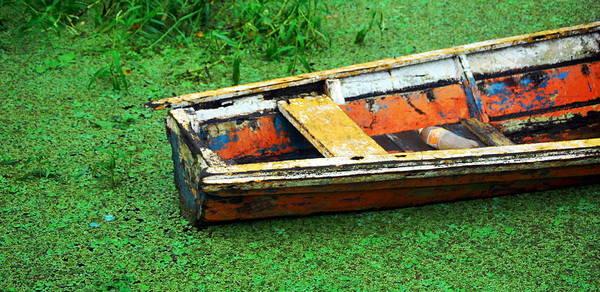 Brillante Photograph - A Boat On Amazon Green Swamp  by HQ Photo