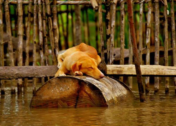 Brillante Photograph - A Bory Dog by HQ Photo