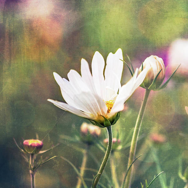 Photograph - A Bouquet Of Flowers by Jennifer Grossnickle