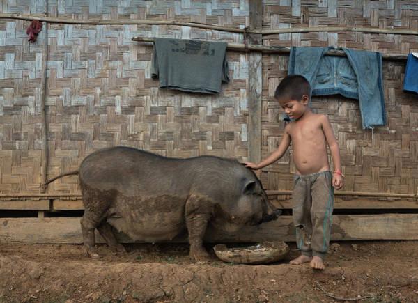 Photograph - A Boy And His Pig by Matt Shiffler