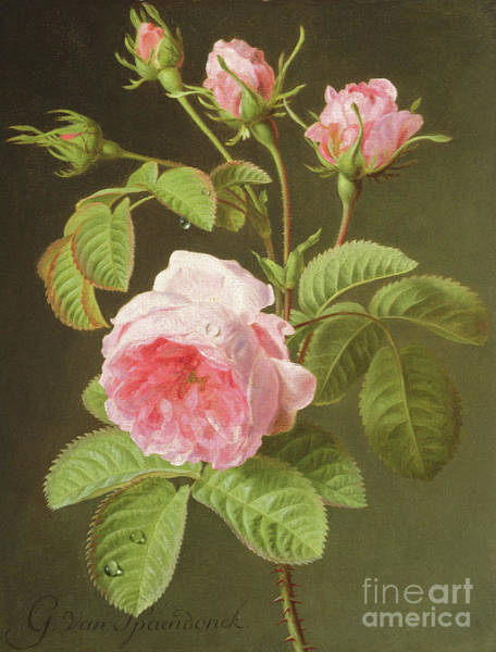 Pretty In Pink Wall Art - Painting - A Branch Of Roses by Cornelis van Spaendonck