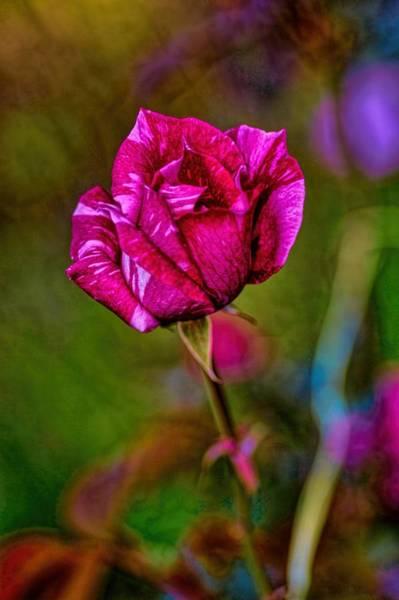 Photograph - A Bud by Diana Mary Sharpton