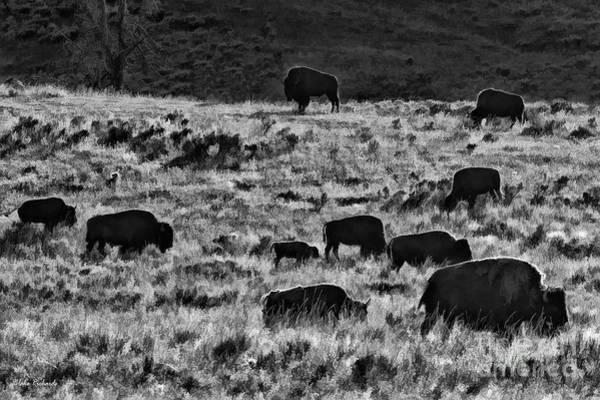 Photograph - A Buffalo Bison Day by Blake Richards