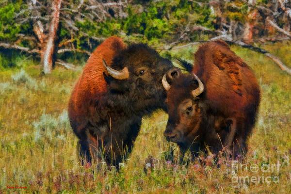 Photograph - A Buffalo Kiss by Blake Richards