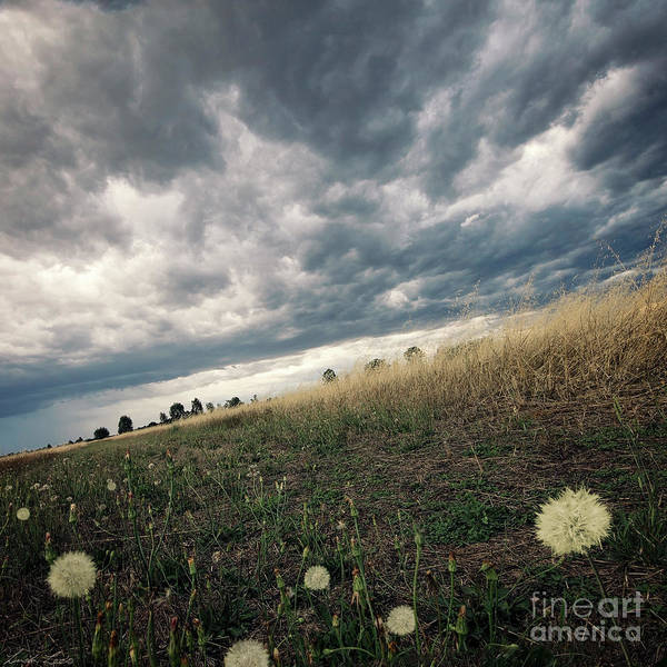 Wall Art - Photograph - A Bug's View by Linda Lees