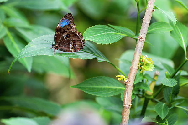 Photograph - A Butterfly Waiting by Raphael Lopez