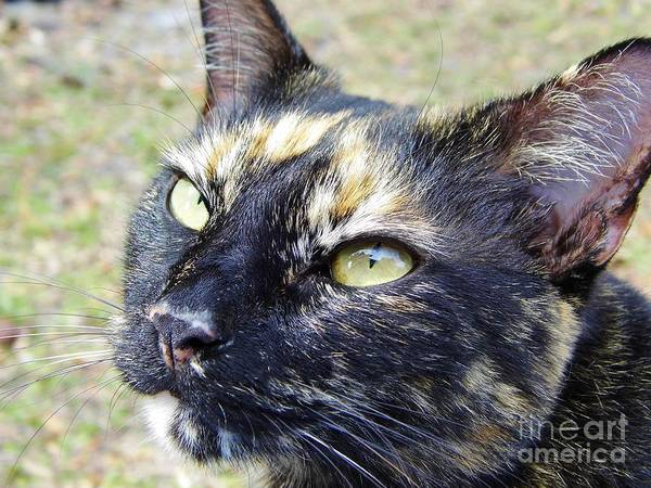 Photograph - A Calicos Beauty by D Hackett