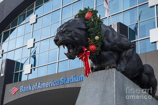 Photograph - A Carolina Panthers Christmas by Kevin McCarthy