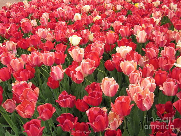 Photograph - A Carpet Of Red by Kathie Chicoine