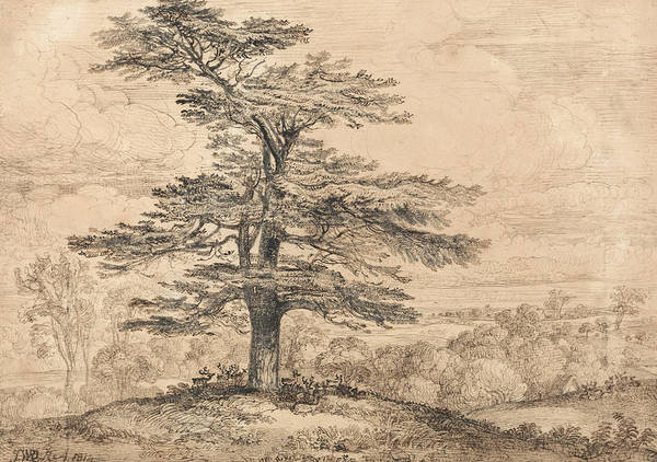Herd Drawing - A Cedar On A Rise With A Herd Of Deer Grouped Beneath Its Shade by James Ward